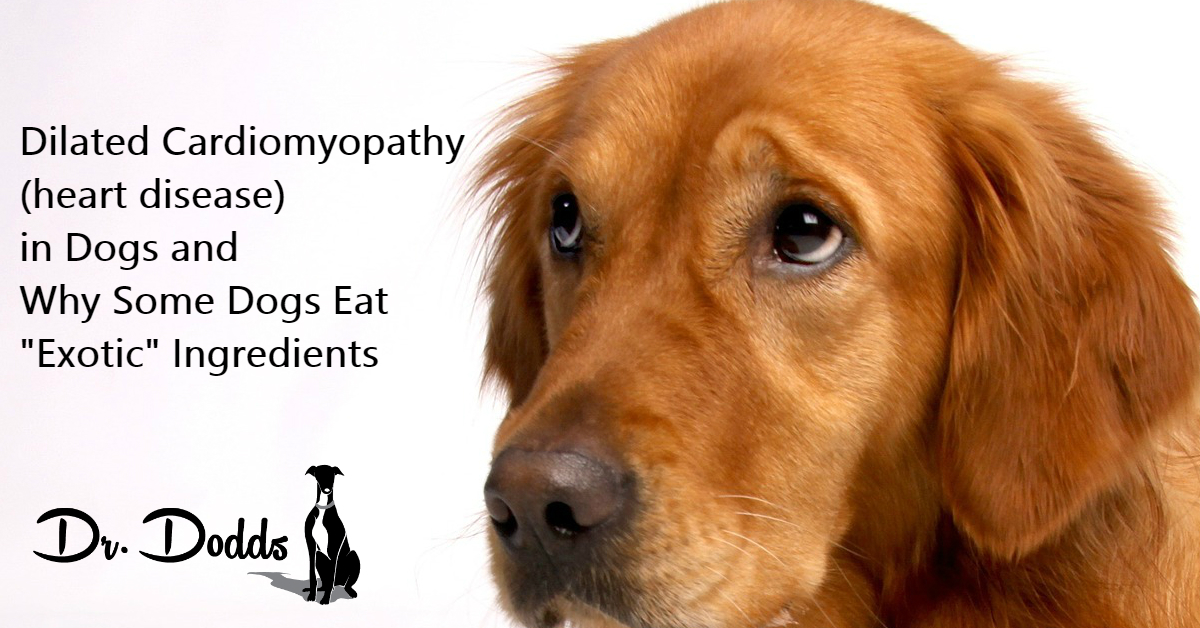 Dilated Cardiomyopathy (heart disease) in Dogs and Why Some